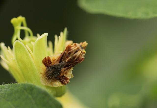 Ambusher on a flower