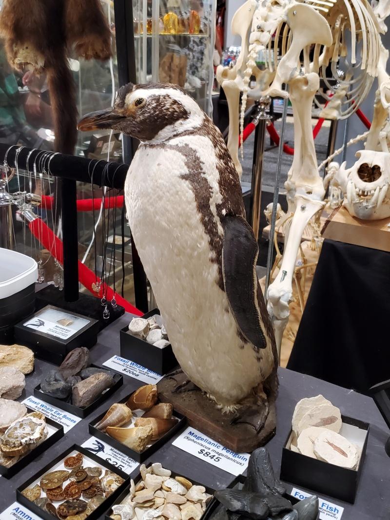 Skull Store penguin