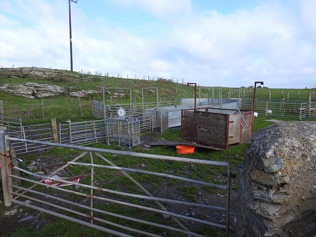 Sheep Paraphernalia, Lon Isallt, Treaddur Bay, Anglesey 6 October 2019