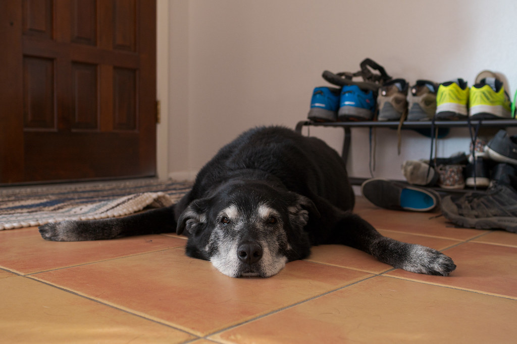 Our dog Ellie sleeps on the tile beside the front door of our rental house on Chritmas Eve in December 2018