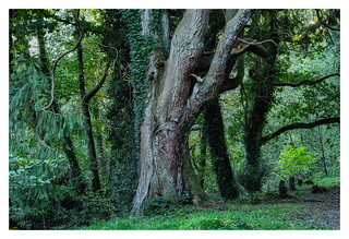 RESPRYN WOODS I | by Barry Haines