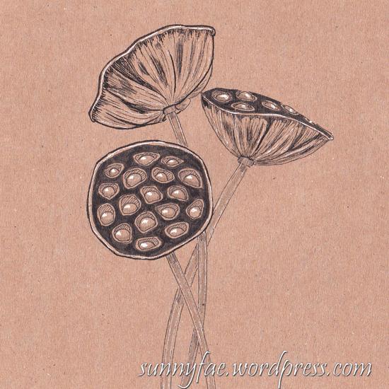 6 lotus seed pod inktober