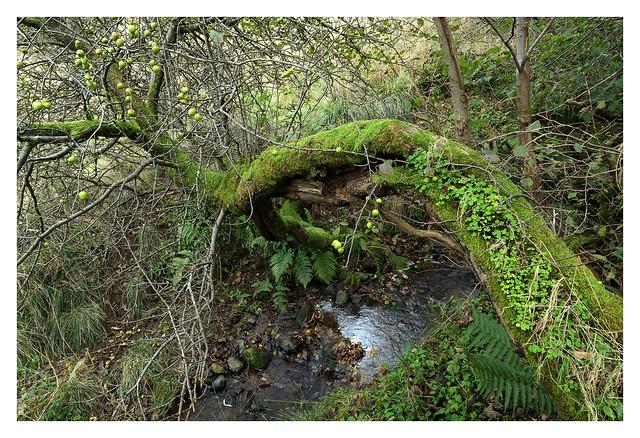 Loch Libo 2019-10-05-9417