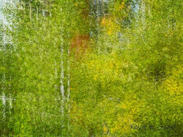 Urban_Fall_Colours_Photo_Walk_9