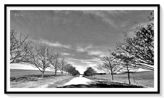 Main tree-lined driveway