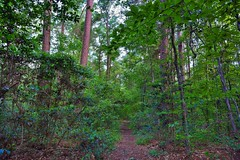 It's Time to Start Planning a New Adventure! (Congaree National Park)