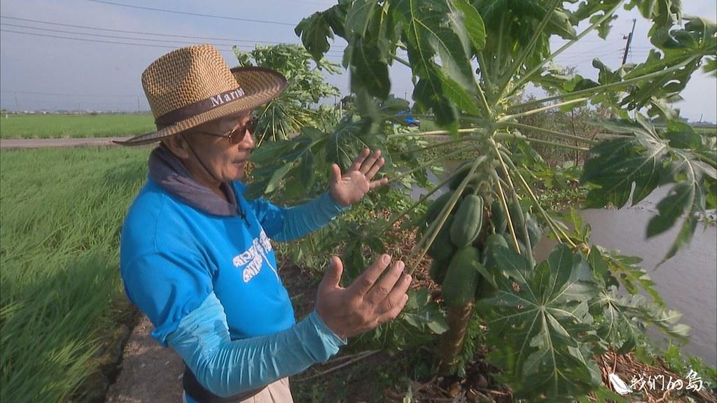 採用自然農法,不灑農藥也不施化肥,以人工除草、用生廚餘當堆肥。