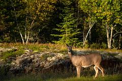 Voyageurs National Park 20190927-_DSC7730