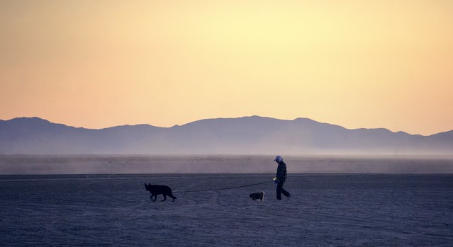 Walking the dogs on the playa