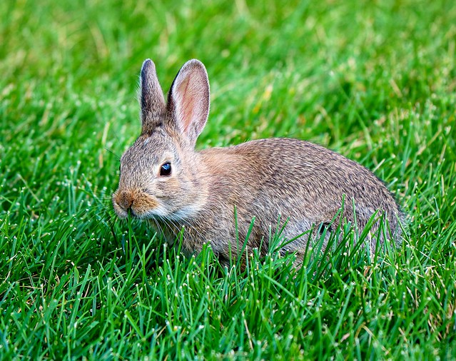 Little bunny, stay away from the garden.