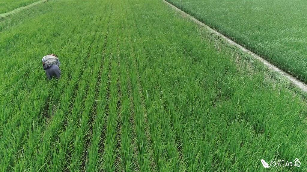 賴榮孝獨自管理兩畝稻田和一大片蔬果園。