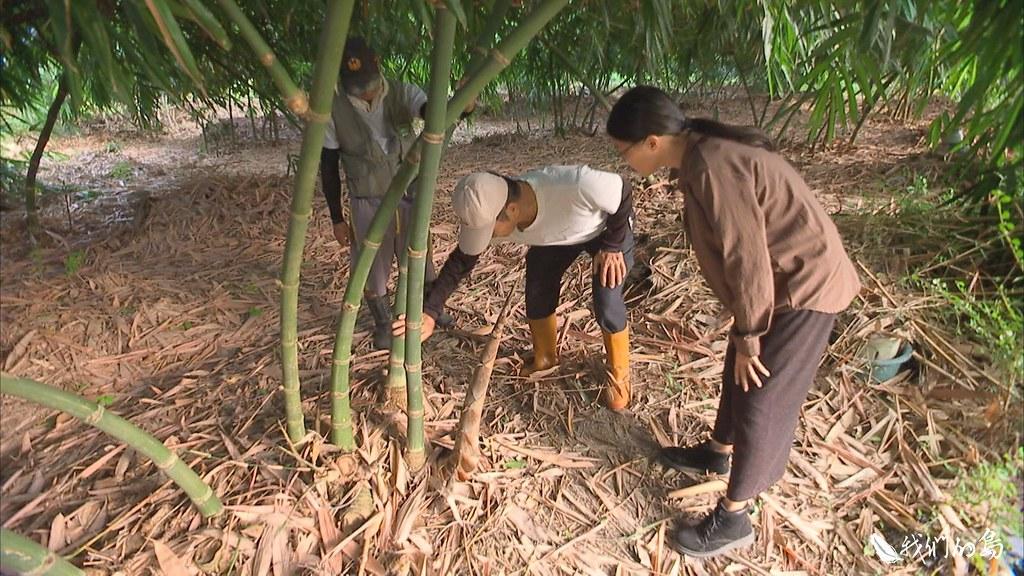 兄弟倆藉由社群平台向親朋好友募資,再透過保價收購,提升筍農繼續栽種的意願。
