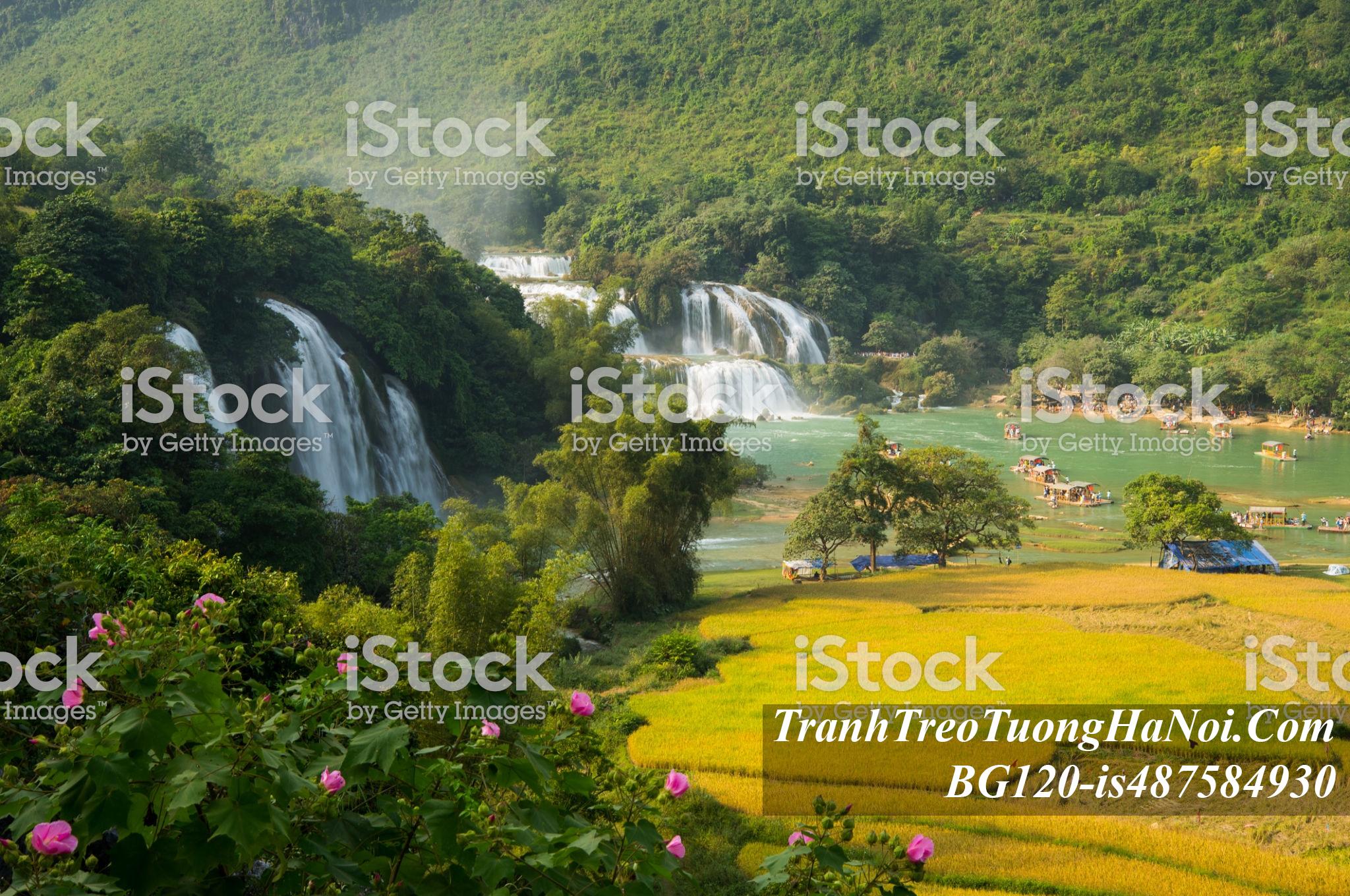 Phong canh dep lang que nong thon viet nam BG120-is487584930