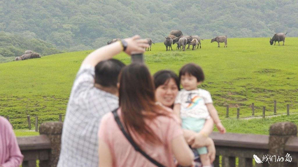 在欣賞牛群同時,如何保持距離,不但是保護自己,也是保護這群水牛朋友的最佳方式。