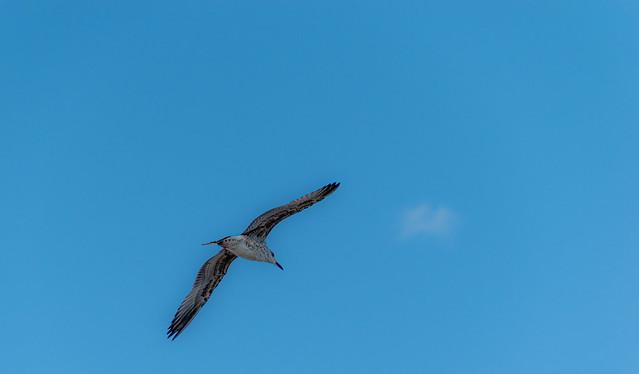 Dans le bleu du ciel