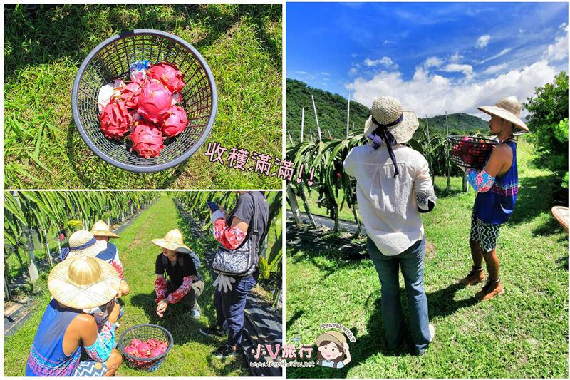 饗嚮台東 台東鹿野深度遊 紅龍果主題小旅行 採果、果醬&冰棒DIY、紅龍果風味餐