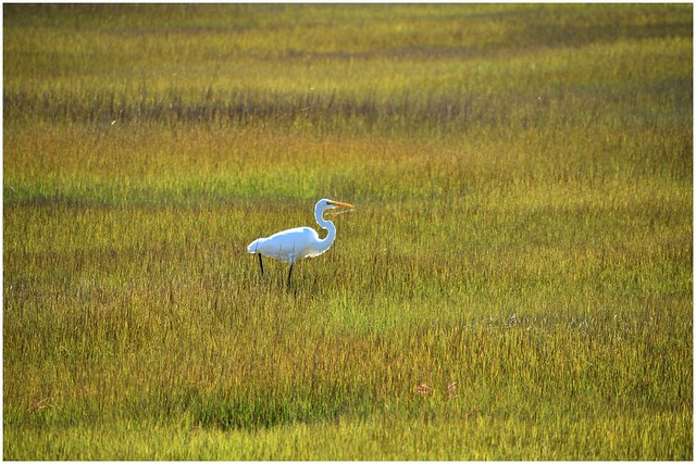 Wildlife @ Nummy Island, New Jersey