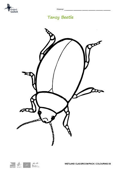Tansy Beetle Colouring Sheet
