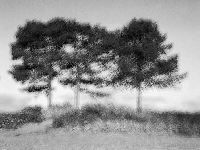 Multi-Expo: Fyrretræer på stranden