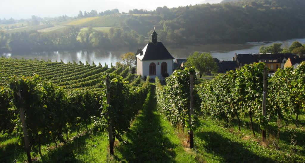 Wijn proeven langs de Moezel | Mooistestedentrips.nl
