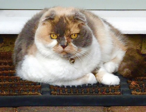 The cat sat on the mat.