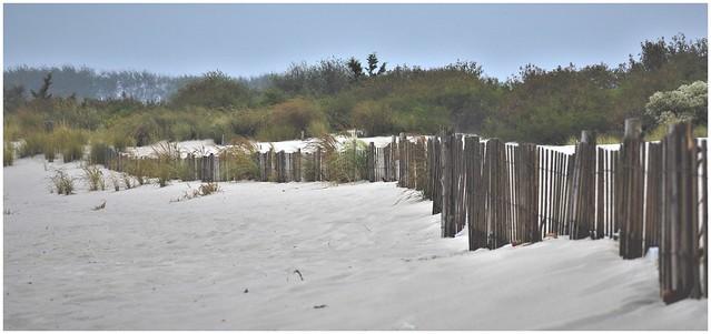 Beach Dunes @ Cape May, New Jersey (HFF)