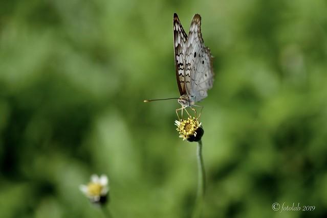 Mariposa sobre flor.
