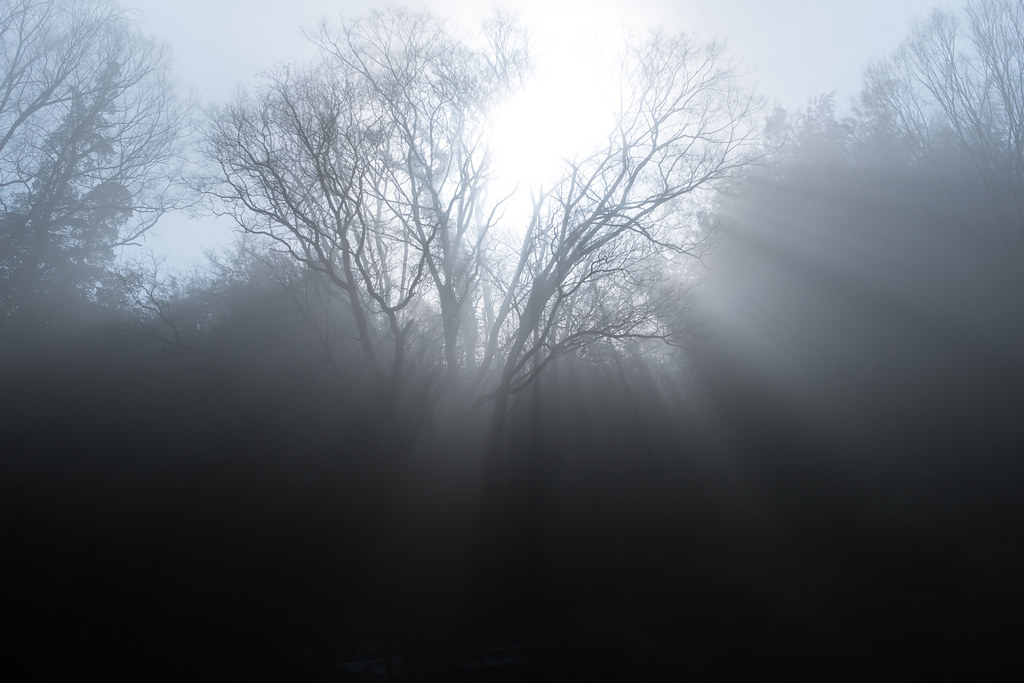 Misty forest 3