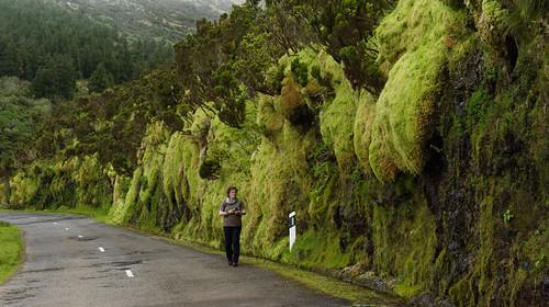 Azores Moos