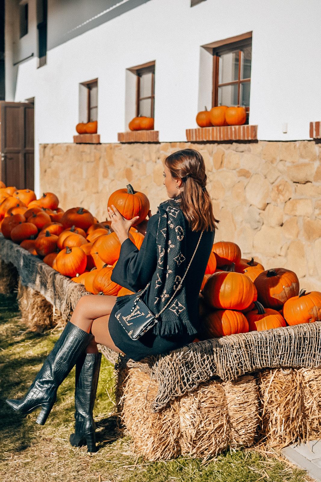 pumpkins4-2