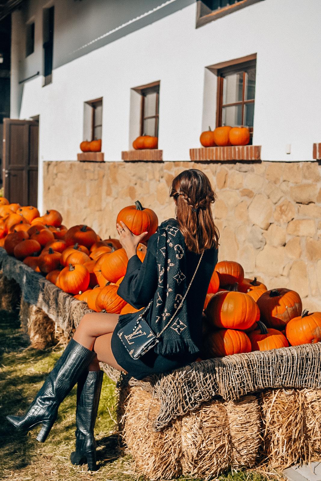 pumpkins3-2