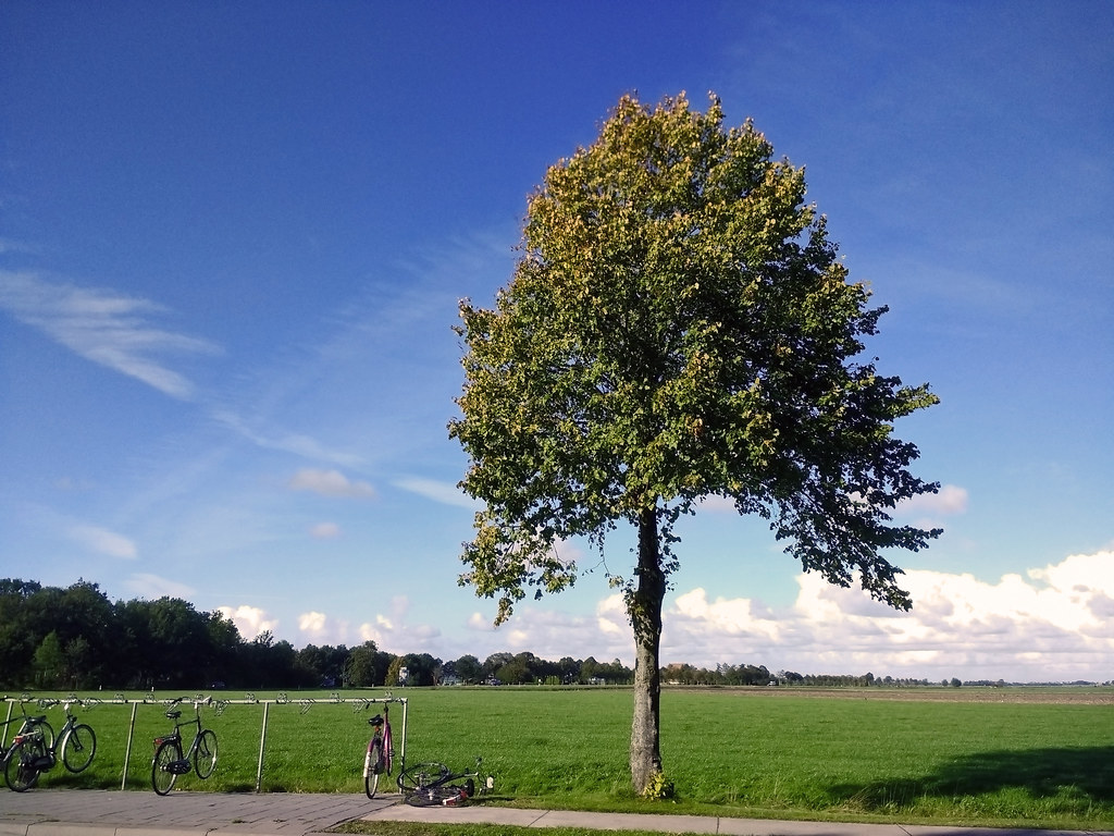 Tree ... (161716252)