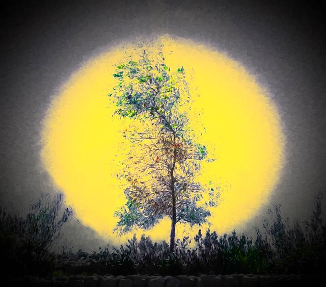 Translucent Autumn
