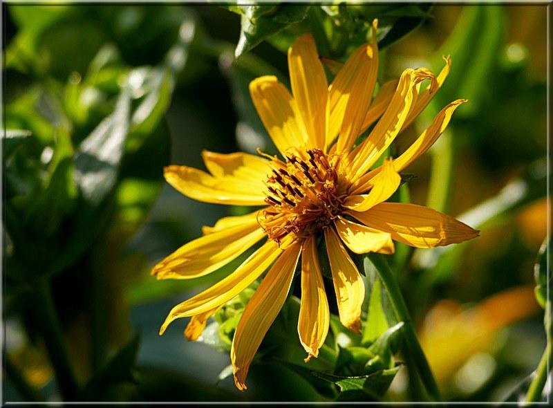 Au jardin des plantes. - Page 6 48861292438_85387c6f38_c