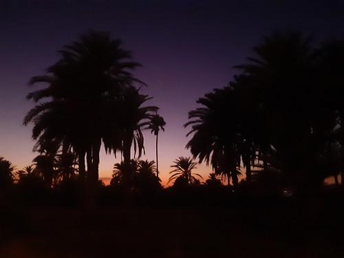 sunset photography monastir tunisia palmtrees