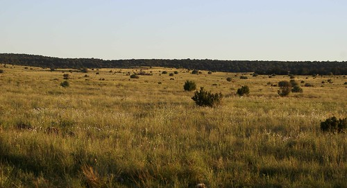 arizona forest landscapes flickr gps counties navajocounty 2017 nationalforests usa unitedstatesofamerica sitgreavesnf