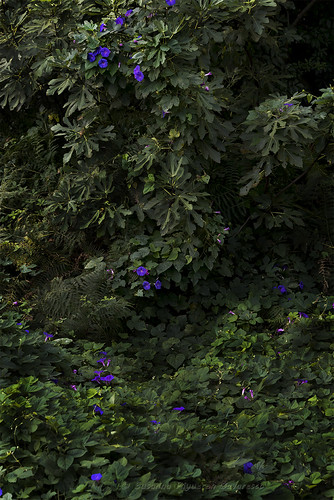 Campanule nel bosco