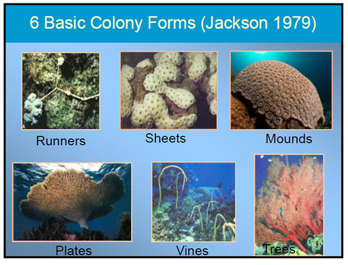 Coral forms