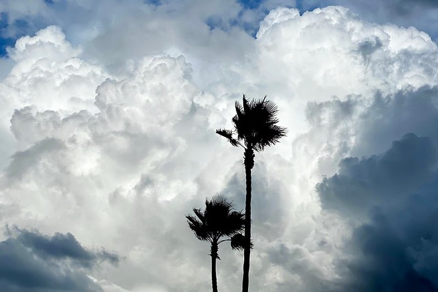 Palms before the Storm
