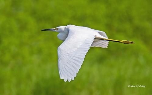 Nice Big Wings