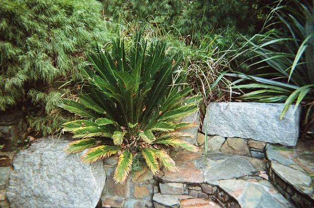 A plant among stones