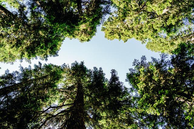 Mount Baker Wilderness_Skyline Divide Trail-1