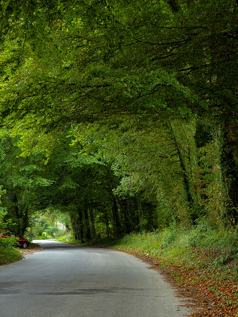 Road side autumn