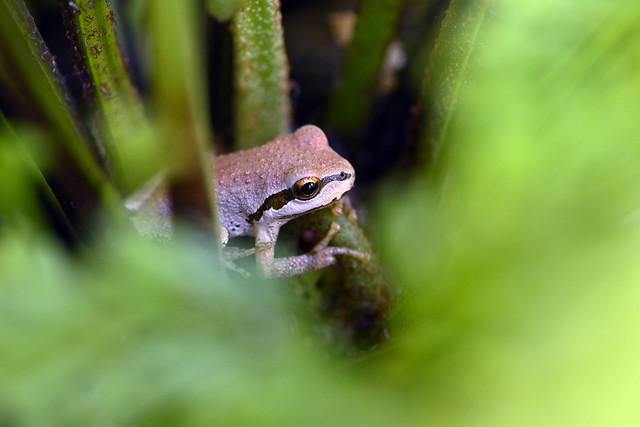 Frog in the fern