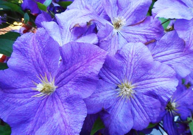 Summer Flowers 05