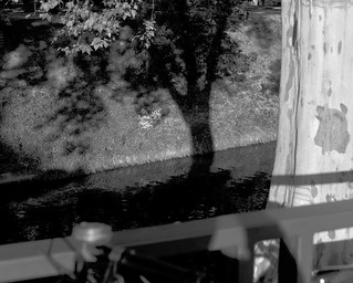The tree shadow