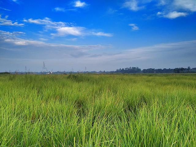 Happy Valley, Baruipur - Grassland Habitat