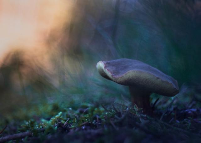 Mushroom Fairytales 2019 - Part 4