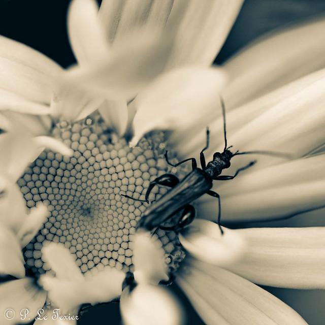 La nuit toutes les fleurs sont grises-7468