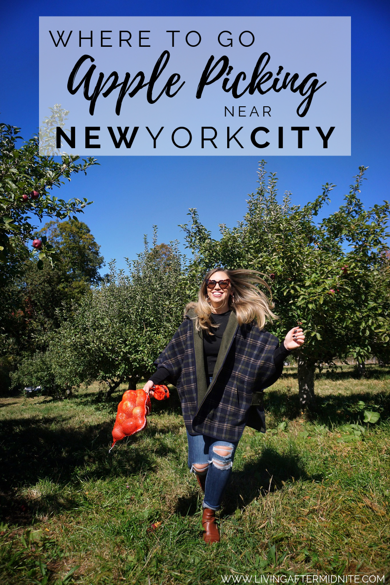 The Best Apple Orchards Close to New York City | Best Places to Apple Pick Near NYC | Where to go Apple Picking near NYC | New York Hudson Valley Westchester County Apple Picking Guide